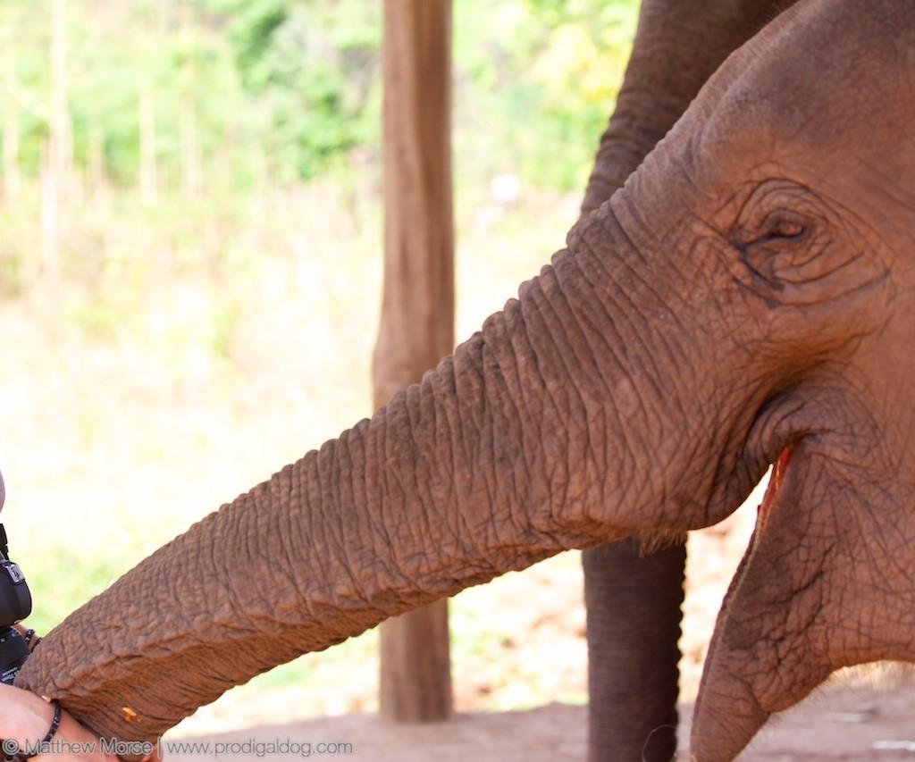 Elephant Camp Feed Elephants