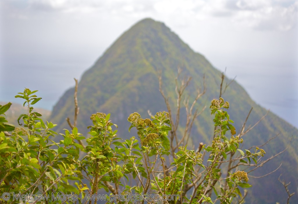 Summit of St. Lucia's Pitons